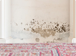 Mold-Remediation-Chicago