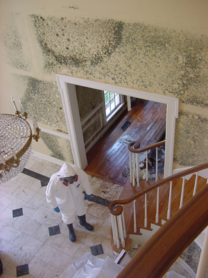 ServiceMaster Mold Remediation Chicago